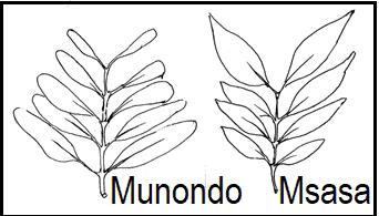 Munondo vs Msasa