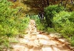 Sandy Track In Hwange - Thumbnail
