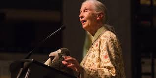 Jane Goodall on Trophy Hunting