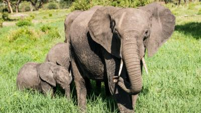 World Elephant Day - should we be worried