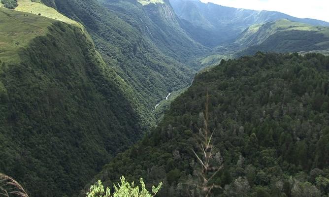 The Biodiversity Of The Bvumba Mountains