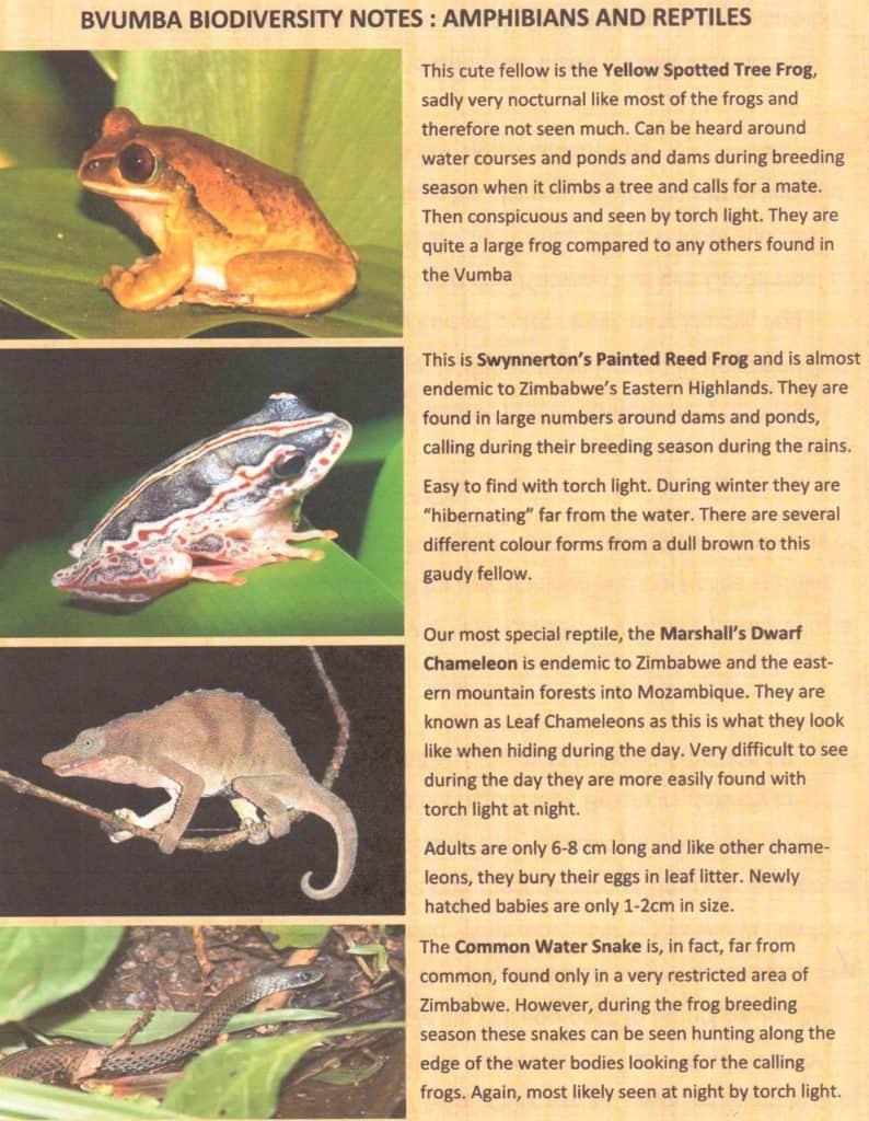 Bvumba - amphibians & reptiles
