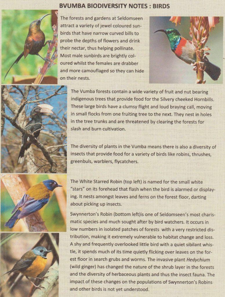 Bvumba - birds