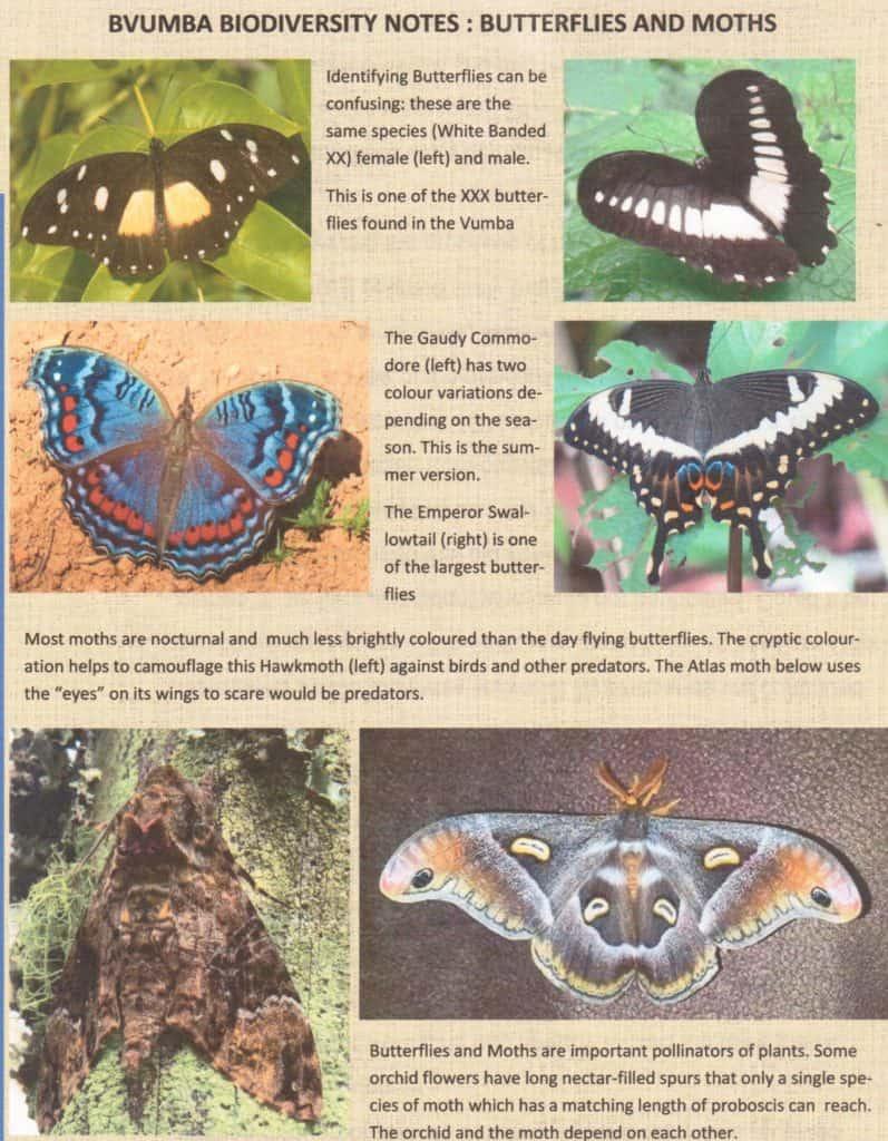 Bvumba - butterflies & moths