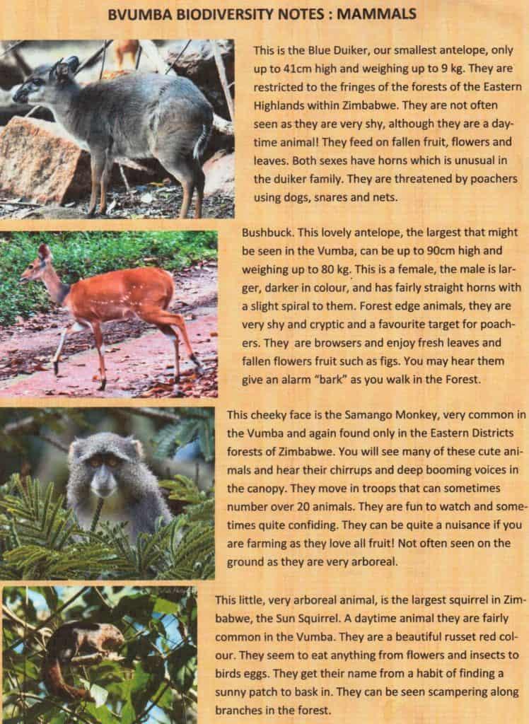 Bvumba - mammals