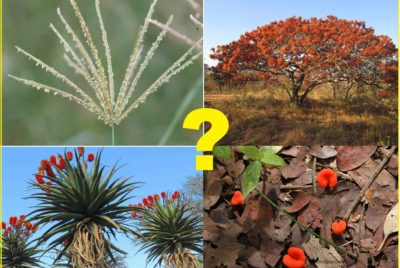 How Do I Learn About Plants - Thumbnail