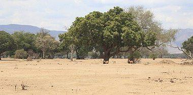 Mana Pools - Dry Season