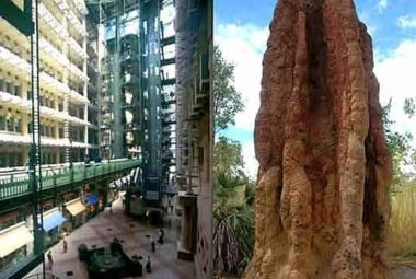 Termite Mound Next To Eastgate Shot