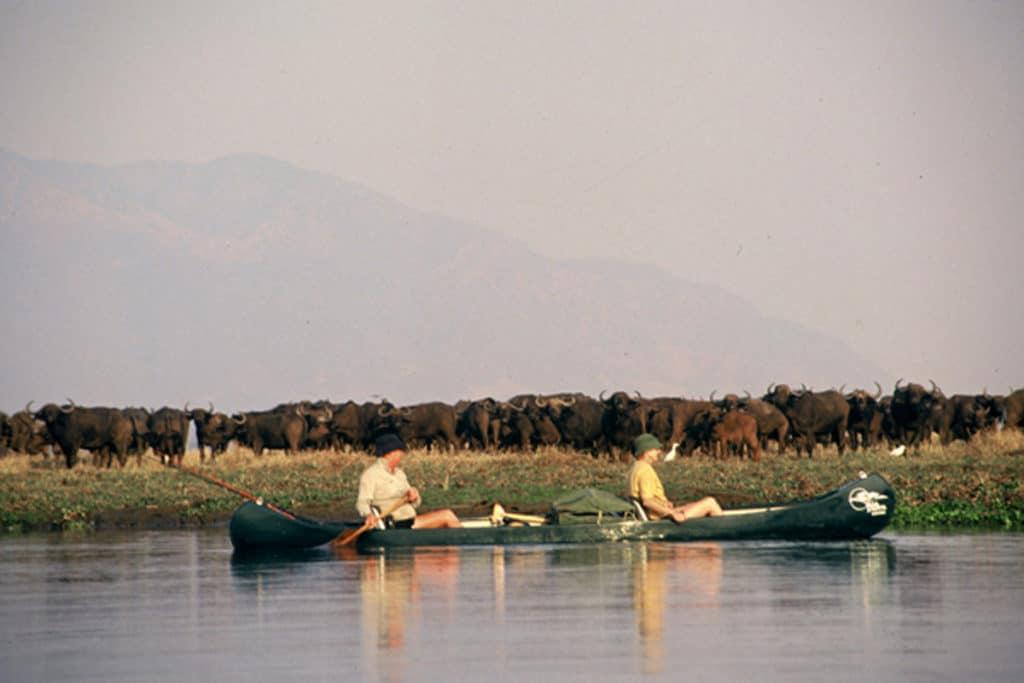 Mana - tourists watching buffalo