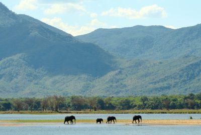 Mana Pools, Elephants In The Zambezi