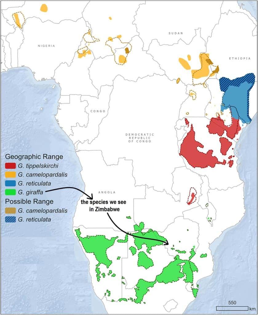 Map of distribution of giraffe species