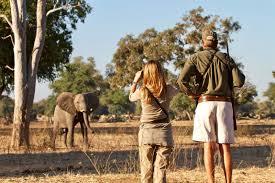 Tourists photographing elephant