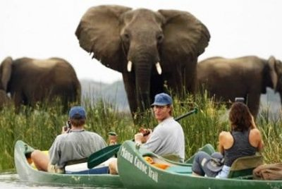 Elephants Viewed From Canoes