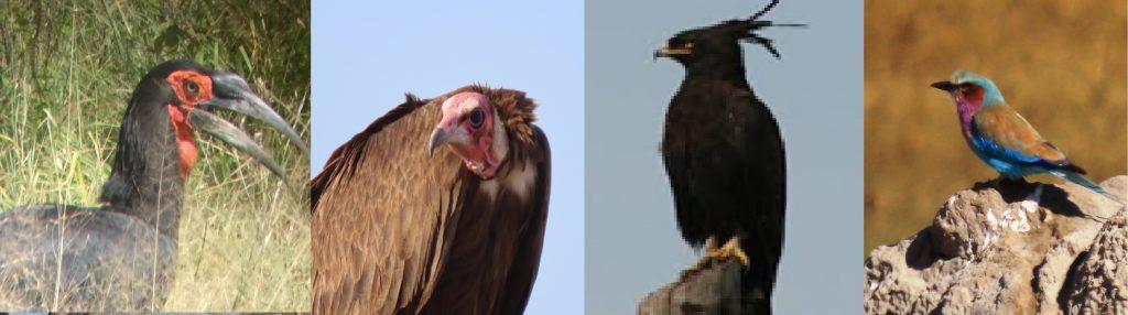 Birds of Hwange