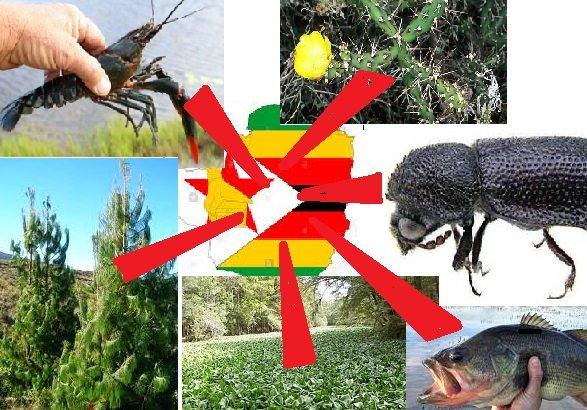 Invasive Alien Species In Zimbabwe