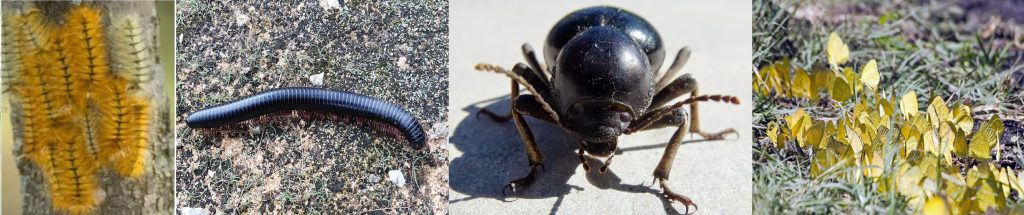 Invertebrates of Hwange